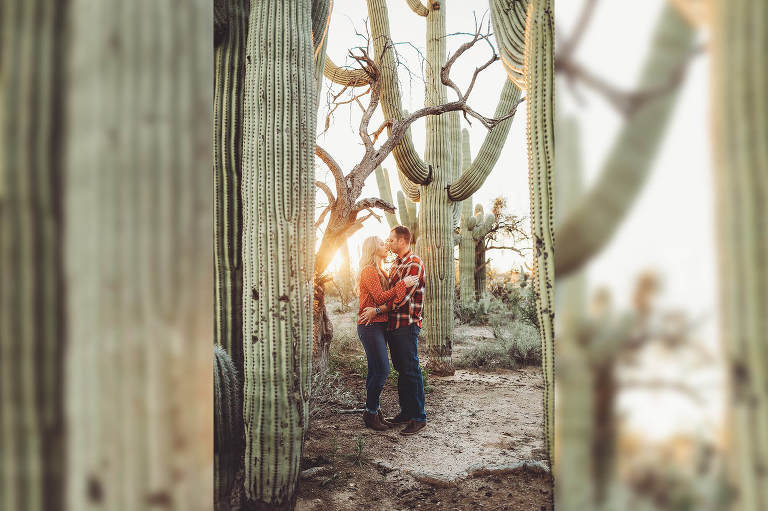 The Freeman's snuggle together in the light of the setting sun surrounded by saguaros during their sunset photo session in Tucson