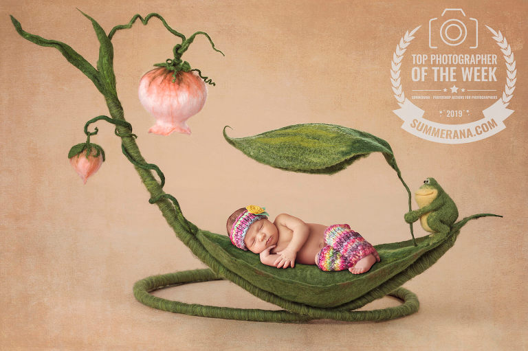 Top 10 Photographer award for a newborn laying on a felted leaf
